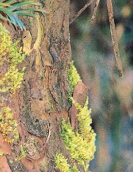 王室・皇室ゆかりの仙樹